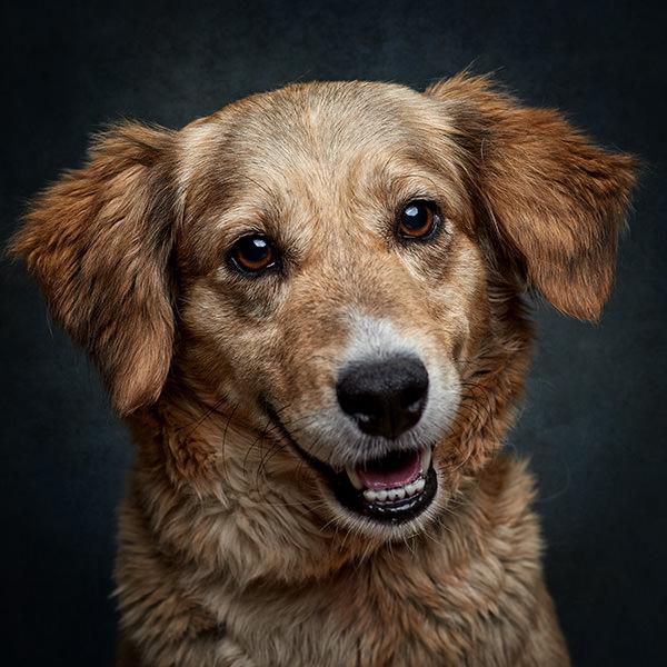 fotografia de animais de estimação, retrato de um cão