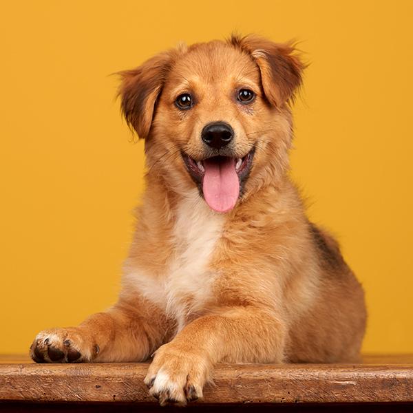 retrato de um cão